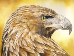 Detail from Eagle-eyed by John Mark Long: www.propheticartists.com