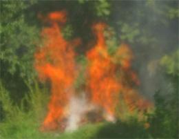 fire-angels_300w