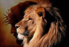 Lion of Judah 1