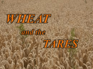 wheat-and-tares