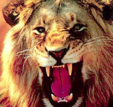 Lion Roars - Credit GodTV