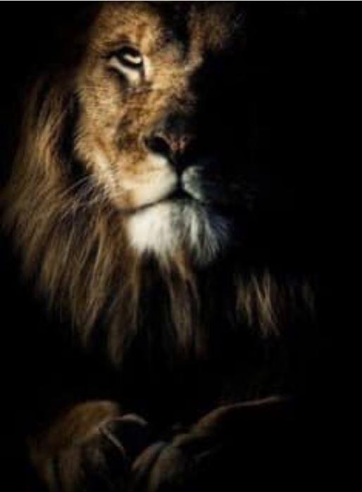 VWest Lion 8 Jan